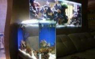 Самп для аквариума: что это такое и для чего он нужен?