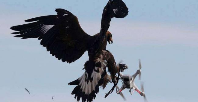 quadcopter-fpv_orel_protiv_drona.jpg