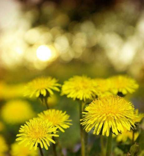depositphotos_10136509-stock-photo-yellow-flowers.jpg