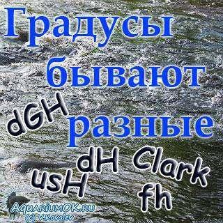 zastavochka_320_IMG_5646.jpg