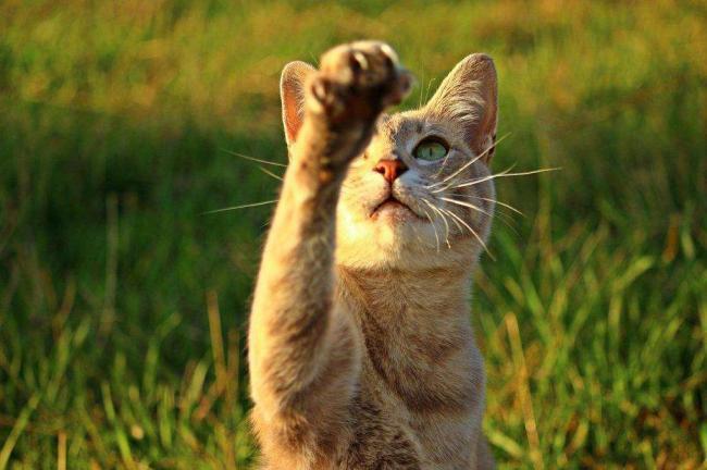 cat-2596412_1280.jpg