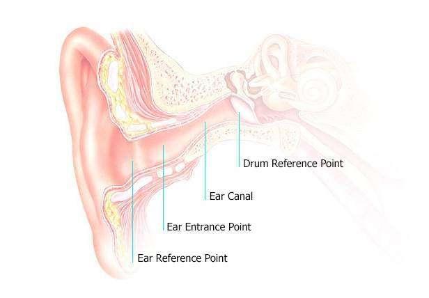 ADZ_Tech_EarStructure.jpg