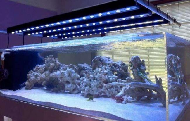 osvechenie-akvariuma.jpg