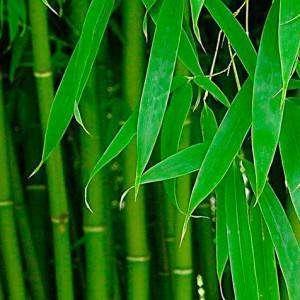 bambuk-volokno-11-300x300.jpg