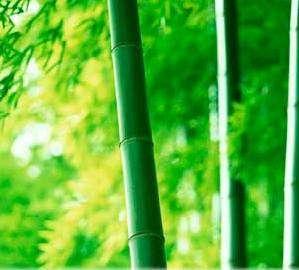 bambuk-volokno-13.jpg