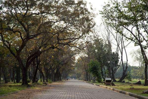 depositphotos_262788444-stock-photo-walkways-park-trees-either-side.jpg