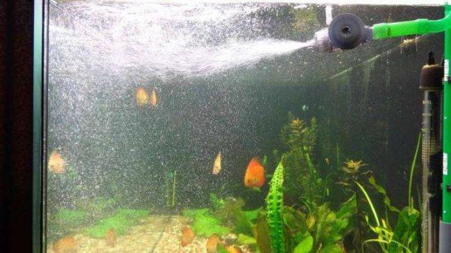 raspylitel-dlya-akvariuma-raznovidnosti-i-izgotovlenie-svoimi-rukami-2.jpg