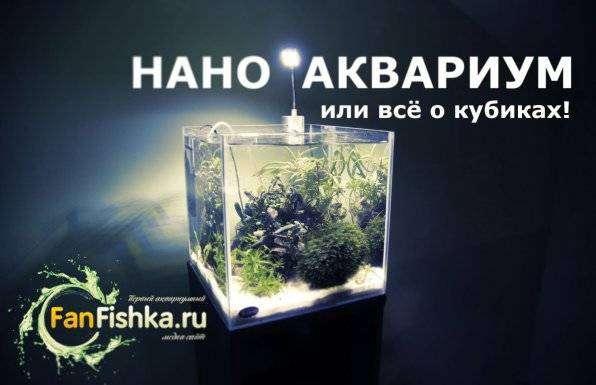 1548342312_nano-akvarium-fanfishka.jpg
