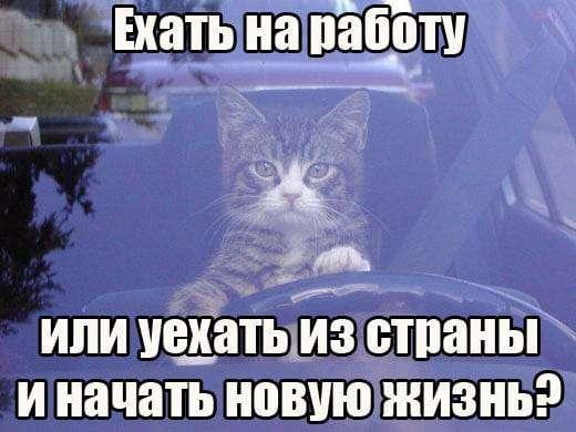 1552982514_12.jpg